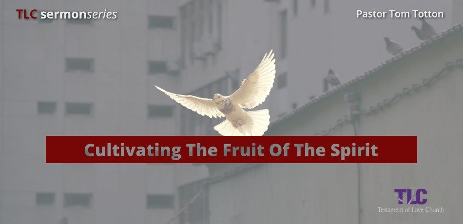 Part 3: Multiplying The Fruit Of The Spirit