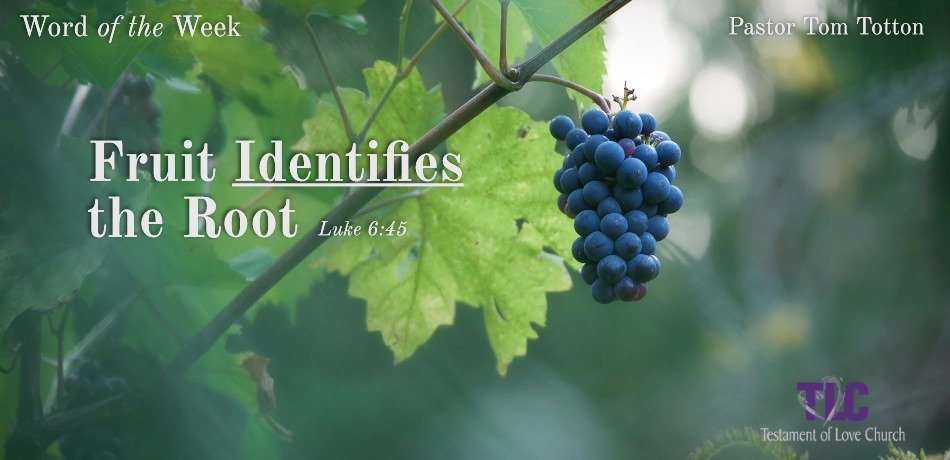 The Fruit Identifies the Root
